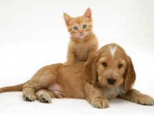 Puppy_And_Kitten_Together